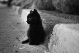 baby-baby-cat-black-and-white-cat-cute-Favim.com-272189